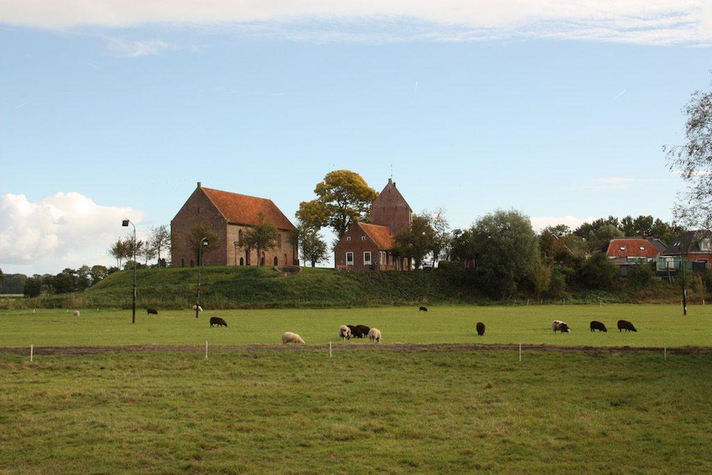 zicht op wierde Ezinge met kerk en losstaande toren met schapen in de voorgrond waar de wierde is afgegraven
