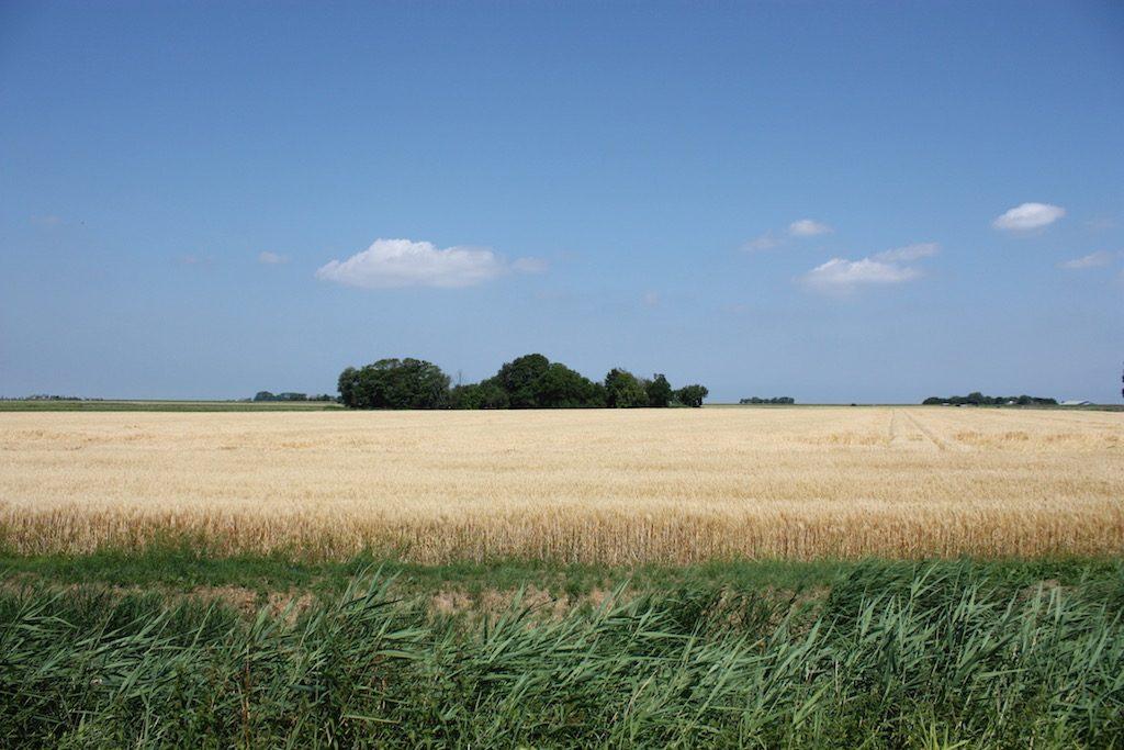 Het Hoogeland met korenakker onder blauwe lucht